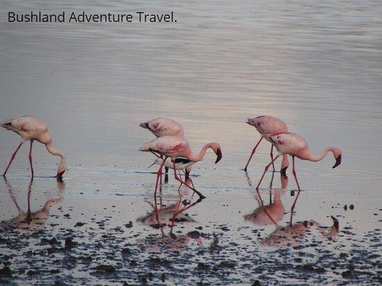 Lake Manyara National Park, Tanzania: Pink Flamingos.
