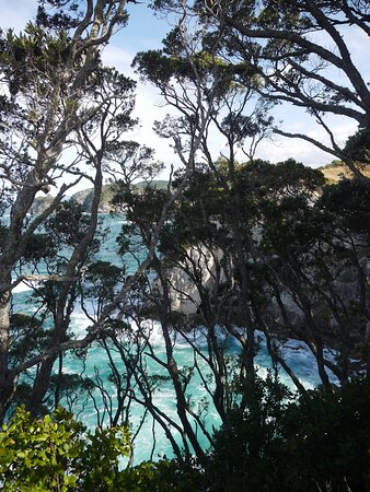View from trail at Te Pare Historic Reserve