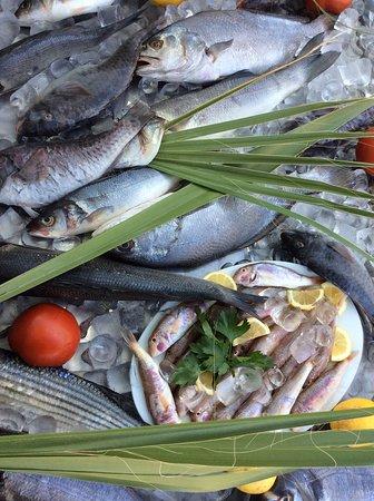 #tazedenizbaliği  Asma6'da günlük taze balıklarımız sizleri bekliyor.  #denizürünleri #rakıbalık #rakımasası #meze #hepbirliktegüzeliz #restoran #rezervasyon #beach #cafe