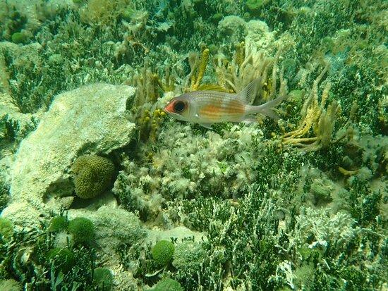 St Thomas Mangrove Lagoon Kayak and Snorkel Tour: fish in snorkeling