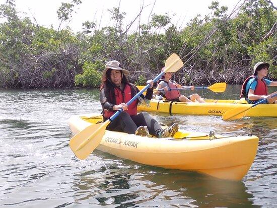 St Thomas Mangrove Lagoon Kayak and Snorkel Tour: kayaking along mangrove photos