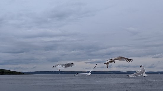Largs Sea Front