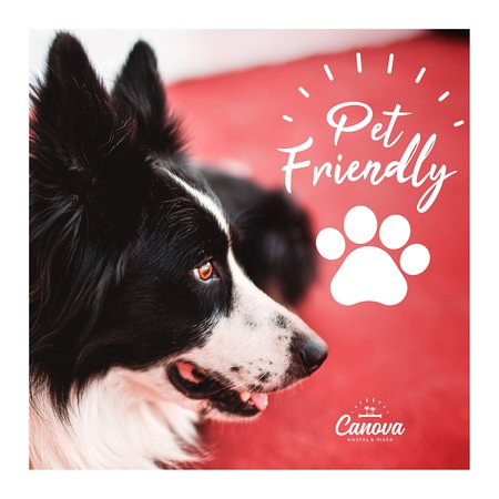 We are pet-friendly