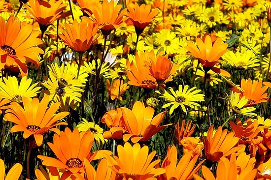 5-Day tour to Namaqualand from Johannesburg