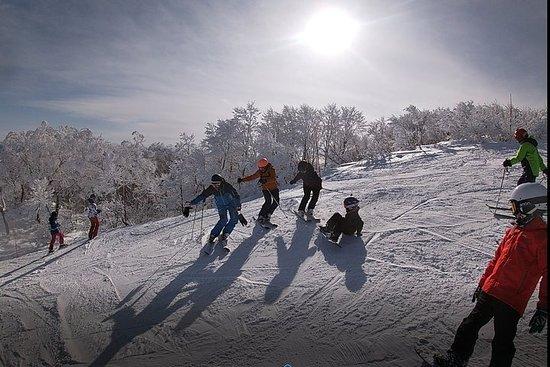 Lección de esquí privada en la estación de esquí de Madarao