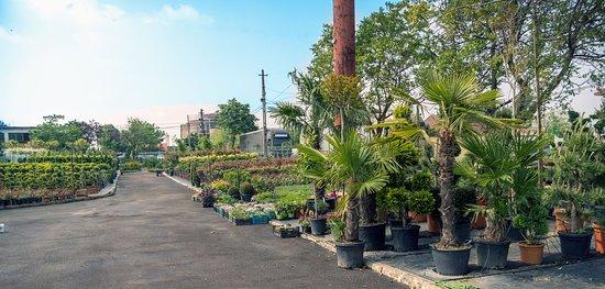 Oradea, رومانيا: Master Garden-Calea Borsului 14K.Plante ornamentale de exterior.Amenajari spatii verzi.