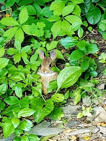 Even our wildlife loves to embrace the grounds!