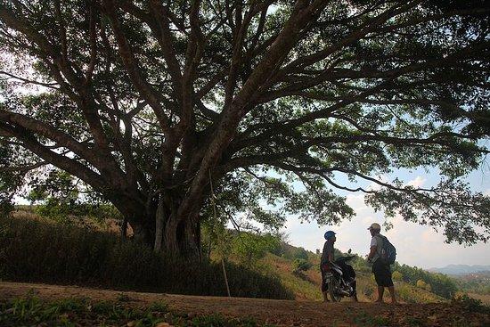 Half Day Tea plantation trek from Pindaya