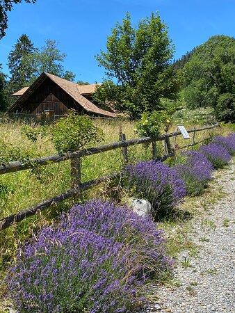 Villa Honegg