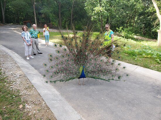 A peacock at Yellow River Wildlife Sanctuary.