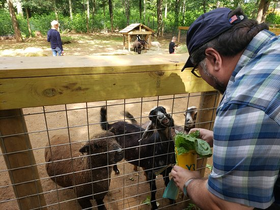 Goat and sheep petting zoo at Yellow River Wildlife Sanctuary.
