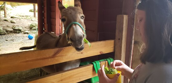"""The star of the show. """"Donkey"""" at Yellow River Wildlife Sanctuary."""