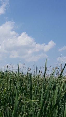 tall grass swamp