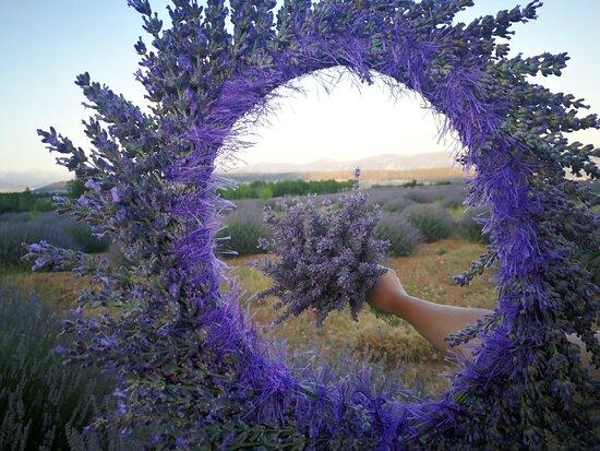 Kuyucak Köyü