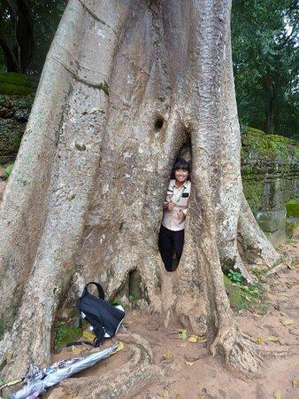 Tree overgrowing walls of  Banyon Temple