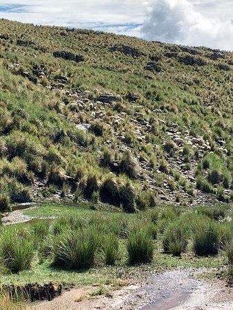 Salto del Tigre: Trekking hacia la Cascada- Provincia de Còrdoba- Argentina 2020.