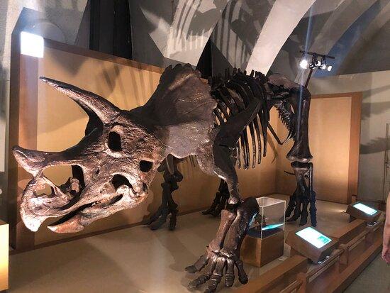 Tokai University Natural History Museum