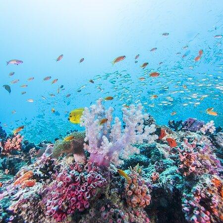 האיים המלדיביים: Maldives reopening July 15