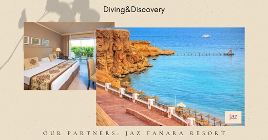 Diving & Discovery: Happy week
