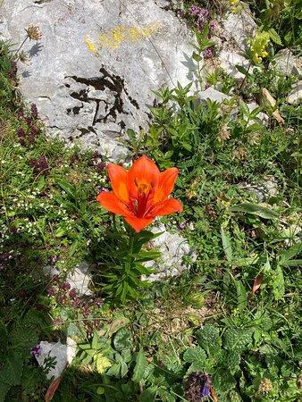 FLOWER POWER 🌈