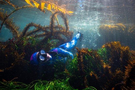 MBAY Freediving