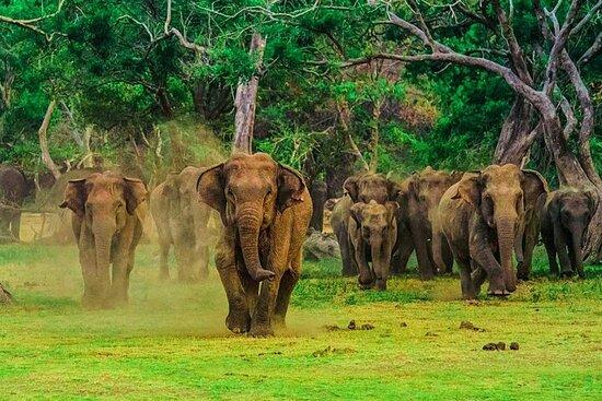 Safari en el Parque Nacional Udawalawe...