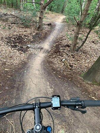 sentier VTT dans sous bois