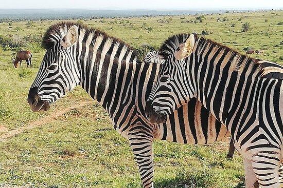 3-dagers Karoo Wildlife Adventure: 3 x nasjonalparker; Rock Art...