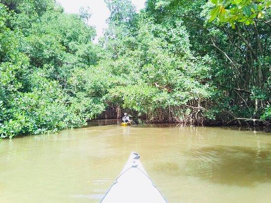 Le Moule, جوادلوب: Randonnée avec le guide Benoit dans la Rivière d'Audoin