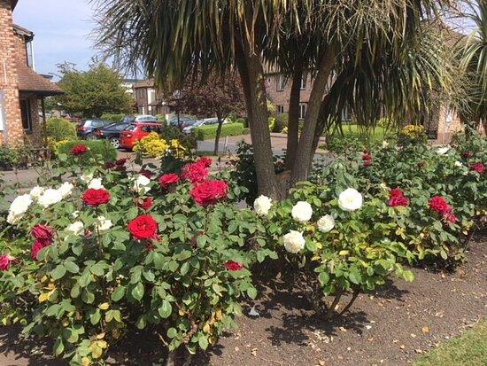 Roses Donnybrook Manor