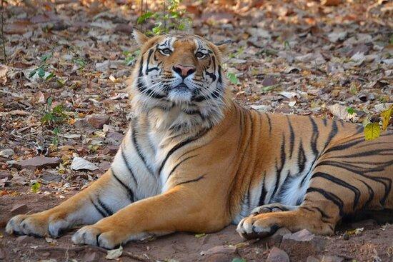 Incredible Wildlife Safari