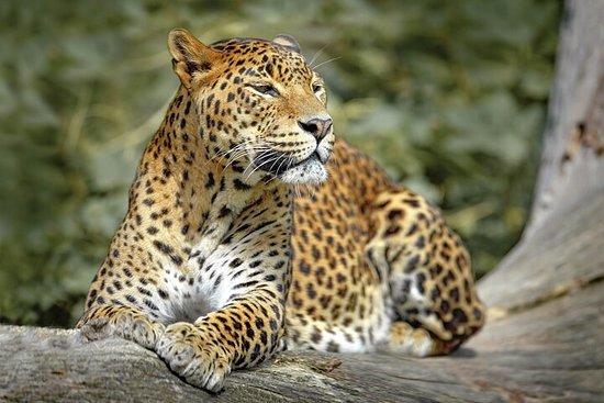 Wilpattu National Park Safari from...