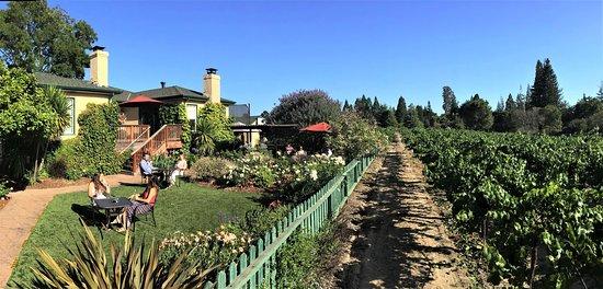 Sebastopol, CA: Our vineyard garden!