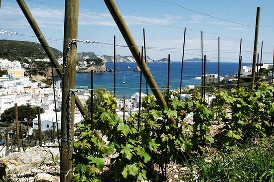 Wine tasting in Ponza with the winemakers