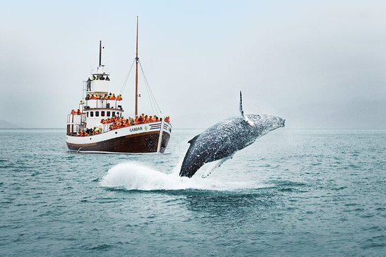Breathtaking nature of Isafjardardjup bay on whale watching join-in...