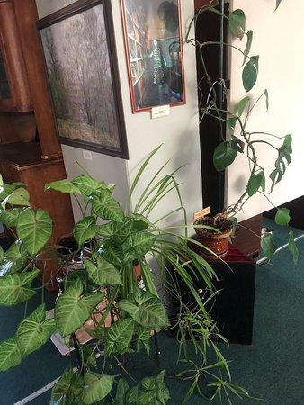 Основной зал. Богатейшая коллекция растений