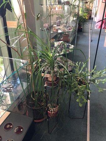 Растения в основном зале