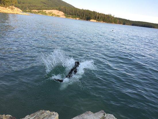 Martin City, Montana: A Dog Diving Paradise