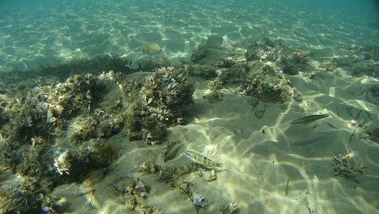 morze i różnorakie rybki