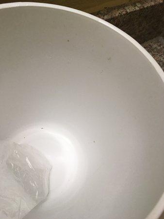 Mold in ice bucket