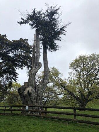 One Tree Hill, Australia: احدى ضواحي أوكلاند نيوزيلندا مكان جميل على جانبيه الأشجار وطرق رائعة للمشي في الطبيعة ومشاهدة الابقار  وقضاء وقت ممتع مع العائلة