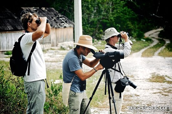 Amar Aves: Birdwatching and Mayan culture