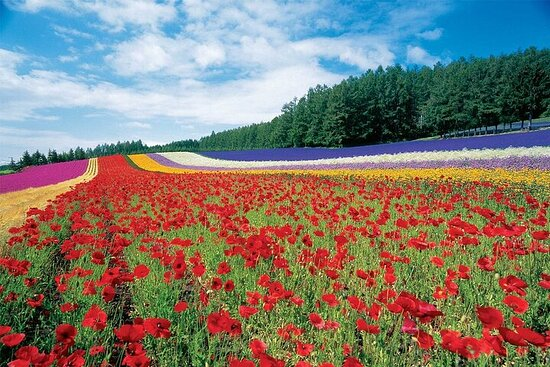 Furano/Biei Private Taxi Full-Day Tour with English Driver
