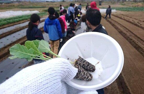 徳泉寺子ども会、畑へ行こう。苗や種を植え、雑草を抜き、収穫します。4月~7月。