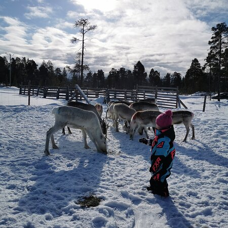 Reindeer Family and Workshop