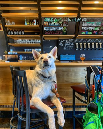 Local pup making the bar her own.