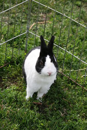 Bunny at the farm