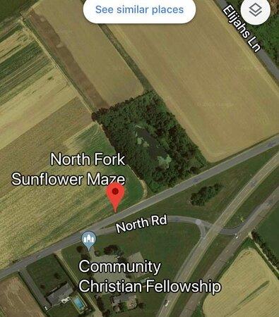 North Fork Sunflower Maze