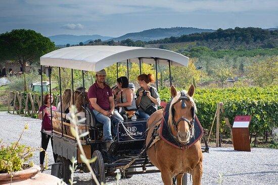 Eksklusiv privat tur: De hemmelige vinene i Suvereto fra Firenze