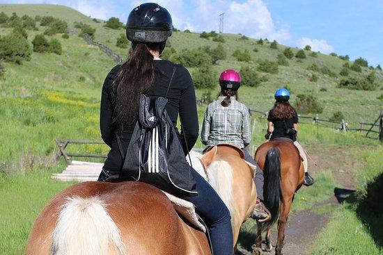 Randonnée à cheval guidée à travers le sentier des fleurs bleues Photo